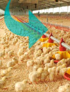 Climatización de granjas de aves